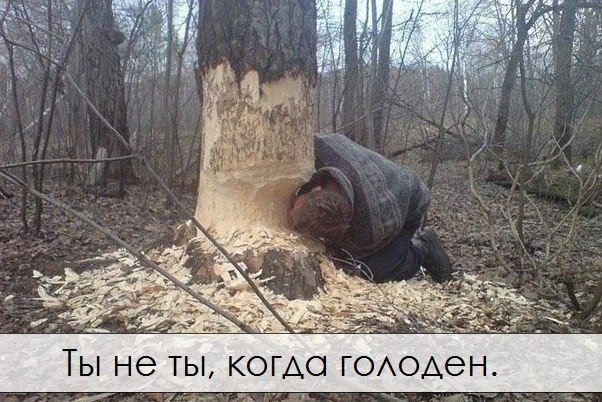 http://cs606117.vk.me/v606117435/4588/ML2vZQFddBk.jpg